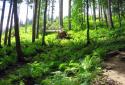 Változatos gyalogtúra a Hochschwab alpesi rétjein