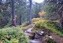 Rauris Őserdő, Rauriser Urwald, mesevilág a Magas-Tauern Nemzeti Parkban