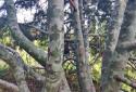 Folly Arborétum, Badacsonyörs