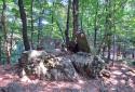 Prédikálószék, Vadálló-kövek