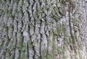 Szarvasi Arborétum, Mini Magyarország