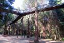Kám, Jeli Arborétum