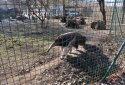 Jászberényi Állatkert