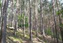 Soproni-hegység, Kilátó túra