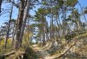 Nagy-Kopasz, túra a Budai-hegység legmagasabb hegyére