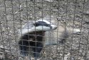 Szarvas, Körösvölgyi Látogatóközpont és Állatpark