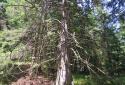 Gemeindealpe, gyalogtúra az Erlaufsee-hez