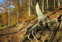 Nagybörzsönyi gyalogtúra, Nagy-Koppány, Nagyirtáspuszta, Tolmács-hegy