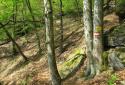 Jauerling, túra a Wachau legmagasabb hegyére