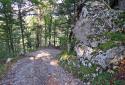 Pokljuka, vad sziklaszurdok, buja növényzettel a Bledi-tó mellett
