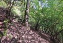 Spartacus-ösvény, a Dunakanyar kultikus túraútvonala