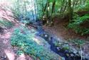 Apát-kúti-völgy, vadregényes túra Visegrád és Pilisszentlászló között